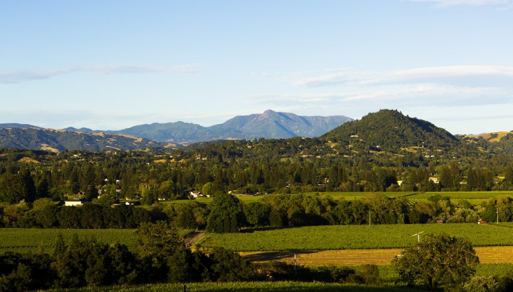 Dry Creek Valley Vineyard Views